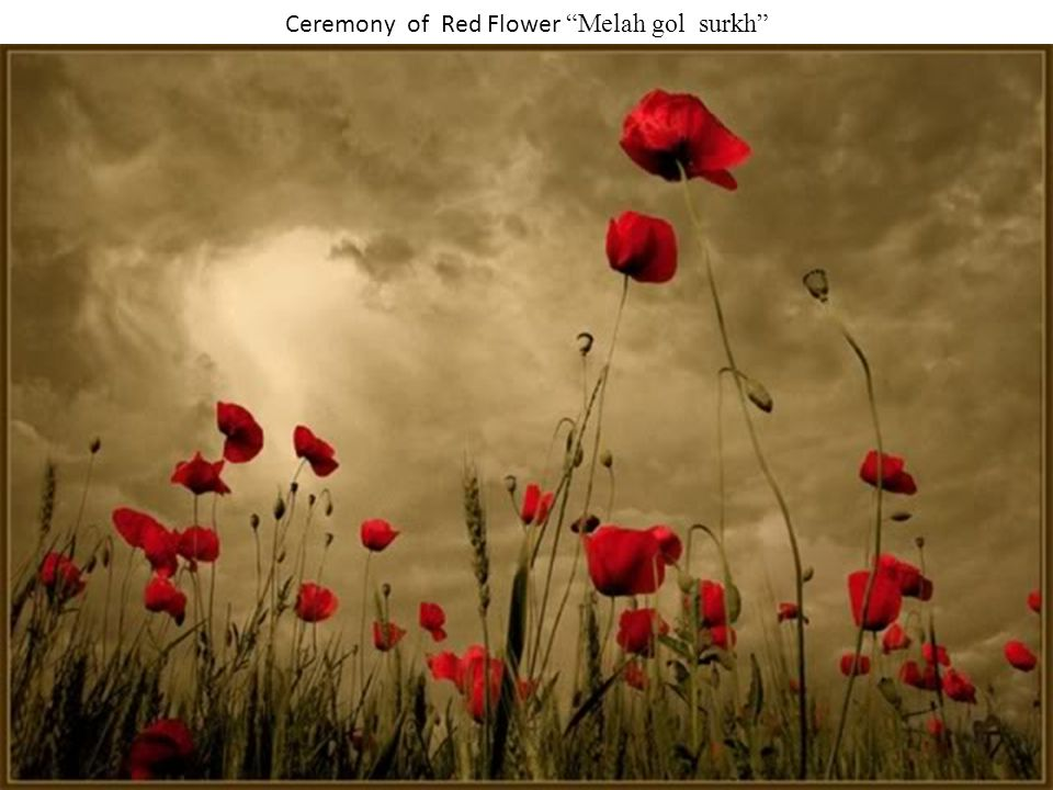 Ceremony of Red Flower Melah gol surkh The name of this Holiday is caused through a great many red flowers that bloom all around the Mazar-e-Sharif city in the new year time