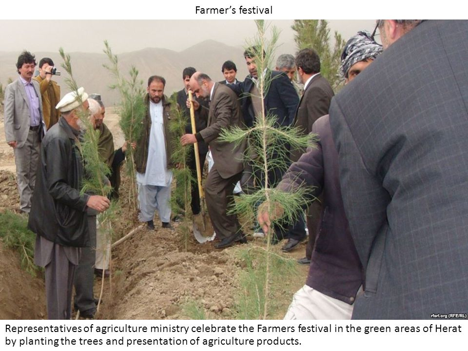 Farmer's festival Representatives of agriculture ministry celebrate the Farmers festival in the green areas of Herat by planting the trees and presentation of agriculture products.