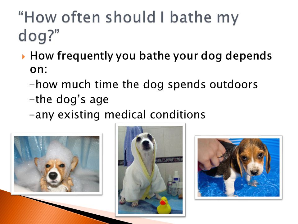  How frequently you bathe your dog depends on: -how much time the dog spends outdoors -the dog's age -any existing medical conditions