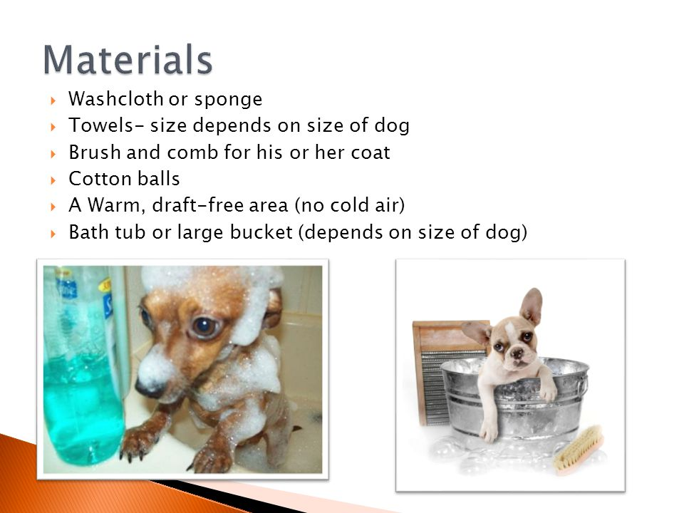  Washcloth or sponge  Towels- size depends on size of dog  Brush and comb for his or her coat  Cotton balls  A Warm, draft-free area (no cold air)  Bath tub or large bucket (depends on size of dog)
