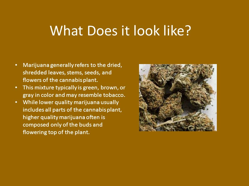 What Does it look like? Marijuana generally refers to the dried, shredded leaves, stems, seeds, and flowers of the cannabis plant. This mixture typica