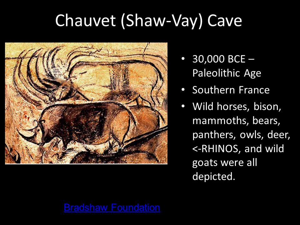 Chauvet (Shaw-Vay) Cave 30,000 BCE – Paleolithic Age Southern France Wild horses, bison, mammoths, bears, panthers, owls, deer, <-RHINOS, and wild goats were all depicted.