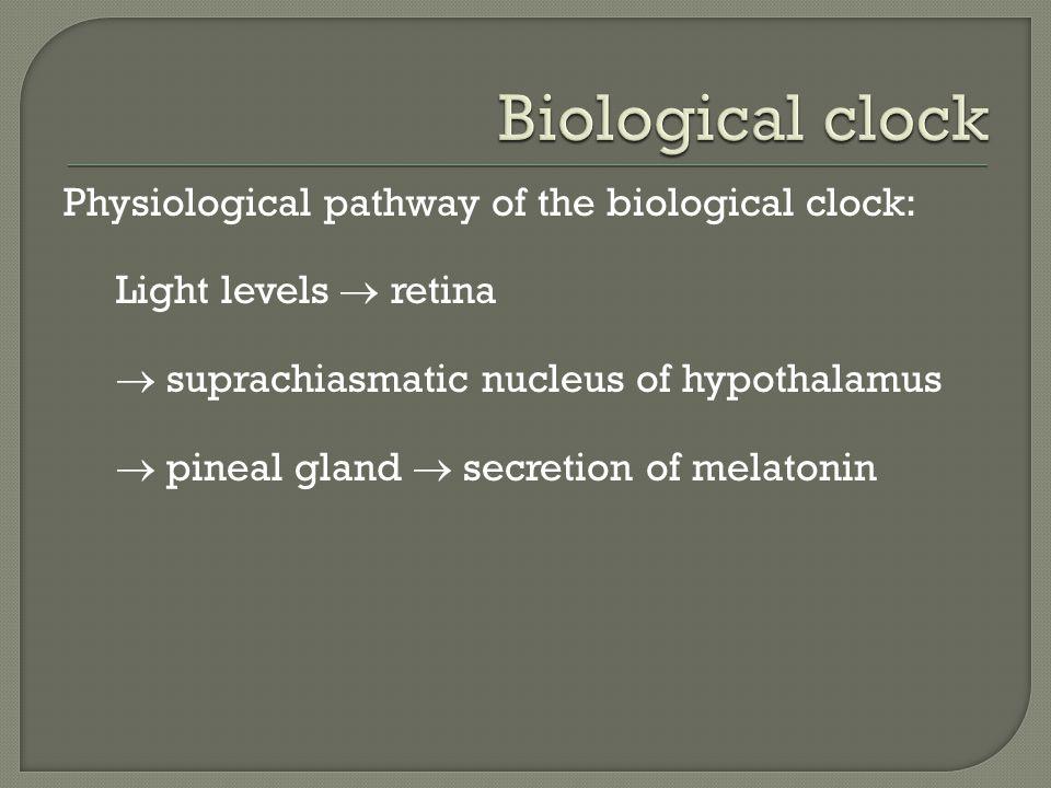 Physiological pathway of the biological clock: Light levels  retina  suprachiasmatic nucleus of hypothalamus  pineal gland  secretion of melatonin