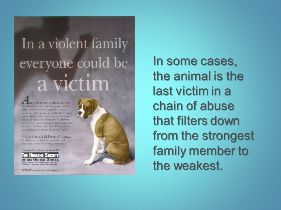 In some cases, the animal is the last victim in a chain of abuse that filters down from the strongest family member to the weakest.