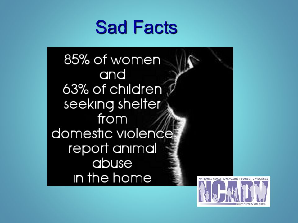 Contact Information Jackie List, Executive Director Jackie List, Executive Director – Safe Shelter of St.