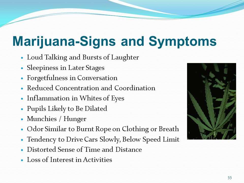 Marijuana-Signs and Symptoms  Loud Talking and Bursts of Laughter  Sleepiness in Later Stages  Forgetfulness in Conversation  Reduced Concentration and Coordination  Inflammation in Whites of Eyes  Pupils Likely to Be Dilated  Munchies / Hunger  Odor Similar to Burnt Rope on Clothing or Breath  Tendency to Drive Cars Slowly, Below Speed Limit  Distorted Sense of Time and Distance  Loss of Interest in Activities 55