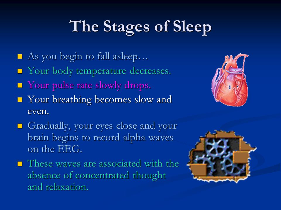 The Stages of Sleep As you begin to fall asleep… As you begin to fall asleep… Your body temperature decreases. Your body temperature decreases. Your p