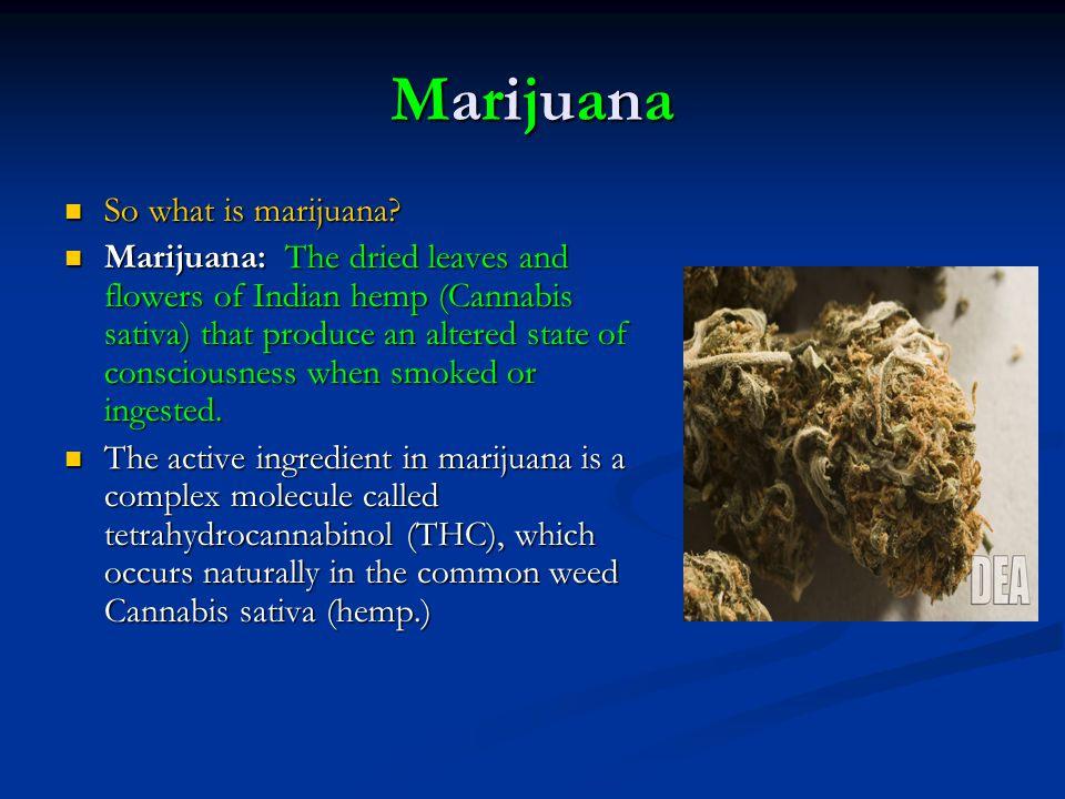 MarijuanaMarijuanaMarijuanaMarijuana So what is marijuana? So what is marijuana? Marijuana: The dried leaves and flowers of Indian hemp (Cannabis sati