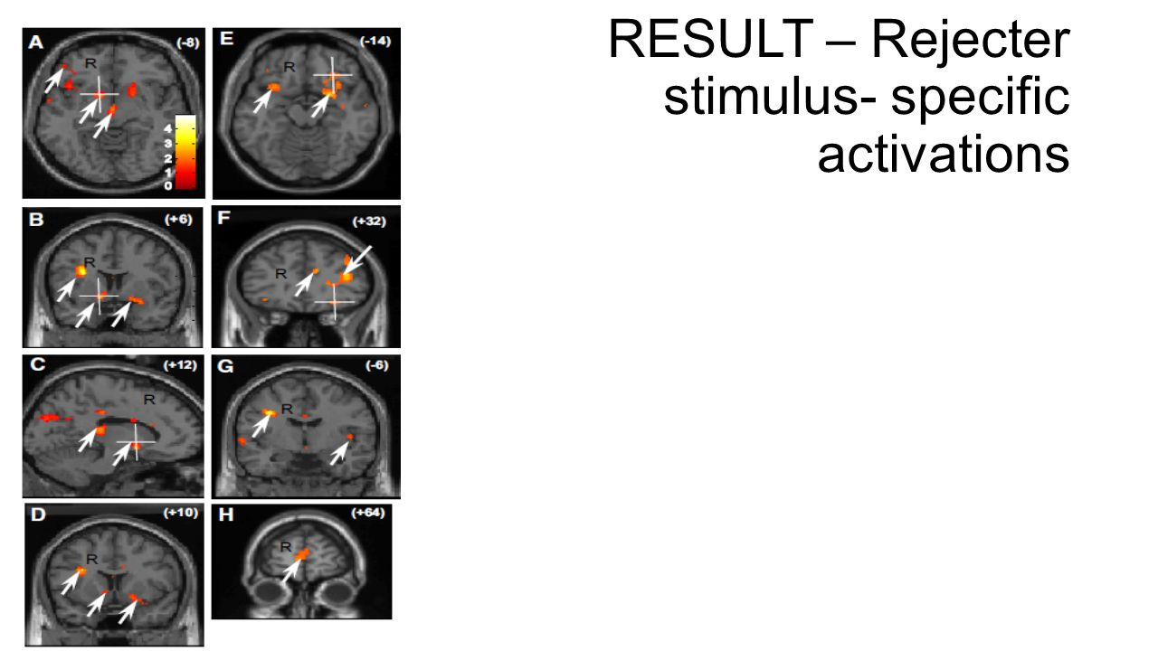 RESULT – Rejecter stimulus- specific activations