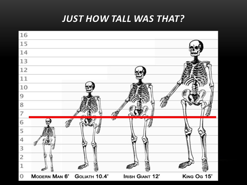 JUST HOW TALL WAS THAT
