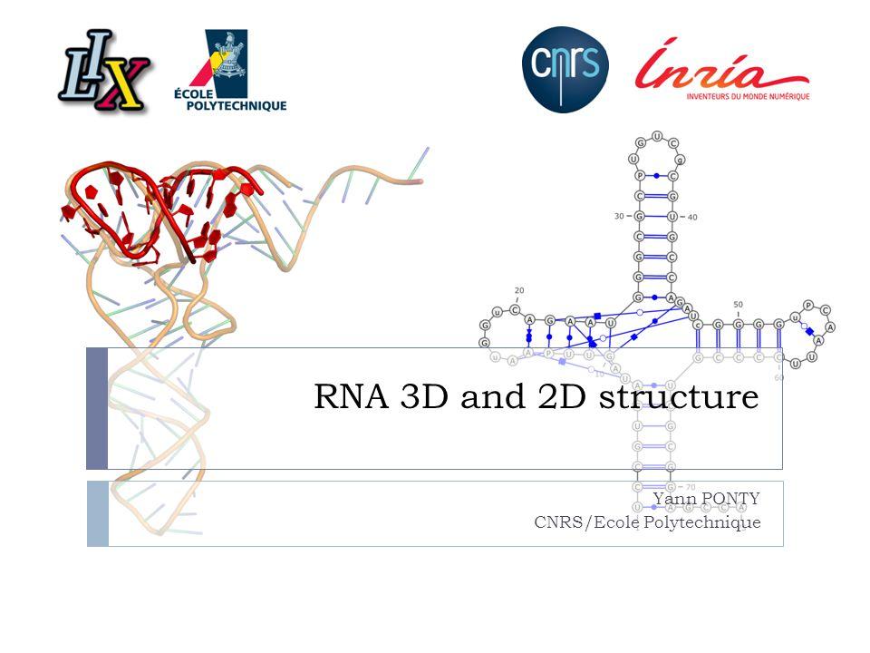 RNA 3D and 2D structure Yann PONTY CNRS/Ecole Polytechnique