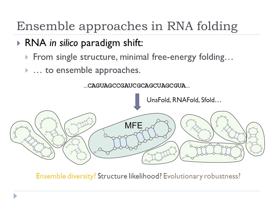 Ensemble approaches in RNA folding  RNA in silico paradigm shift:  From single structure, minimal free-energy folding…  … to ensemble approaches.