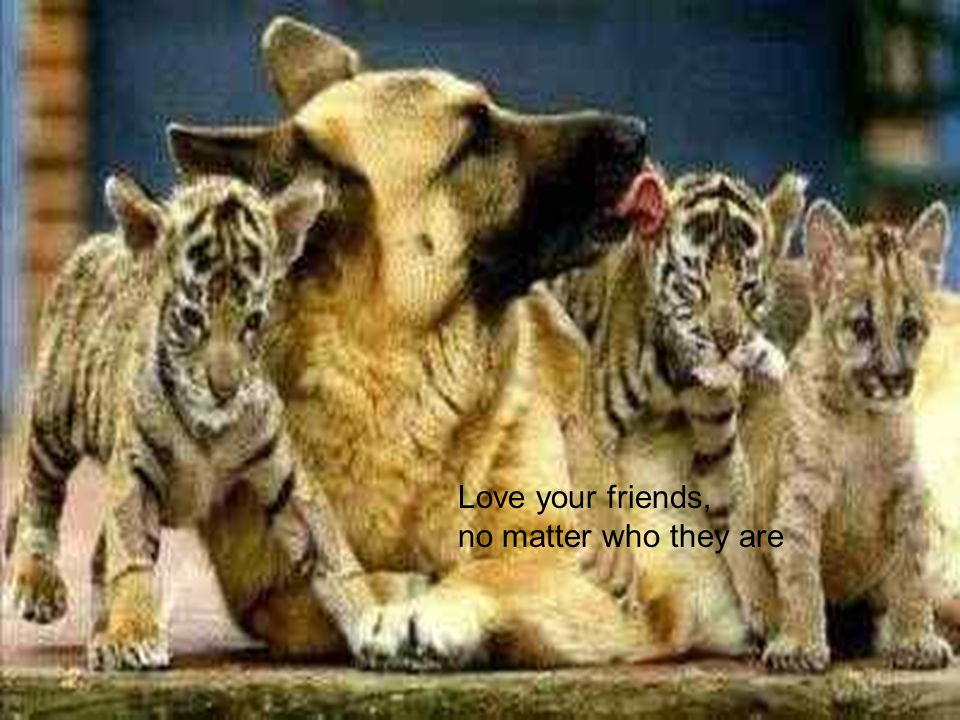 Love your friends, no matter who they are