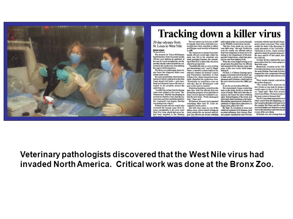 Veterinary pathologists discovered that the West Nile virus had invaded North America.