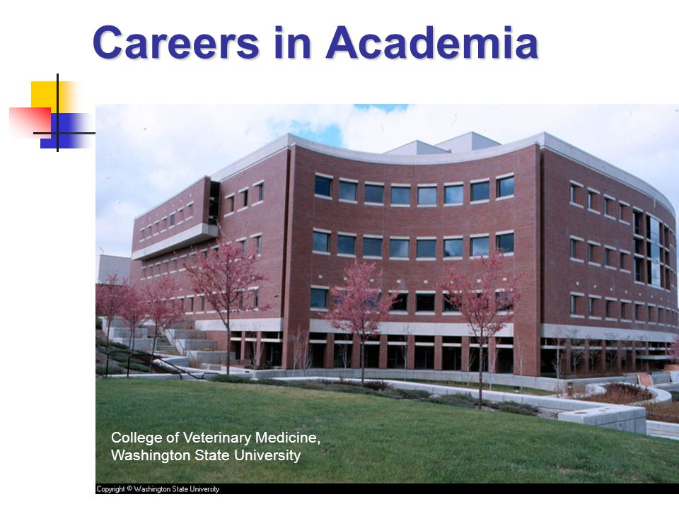 Careers in Academia College of Veterinary Medicine, Washington State University