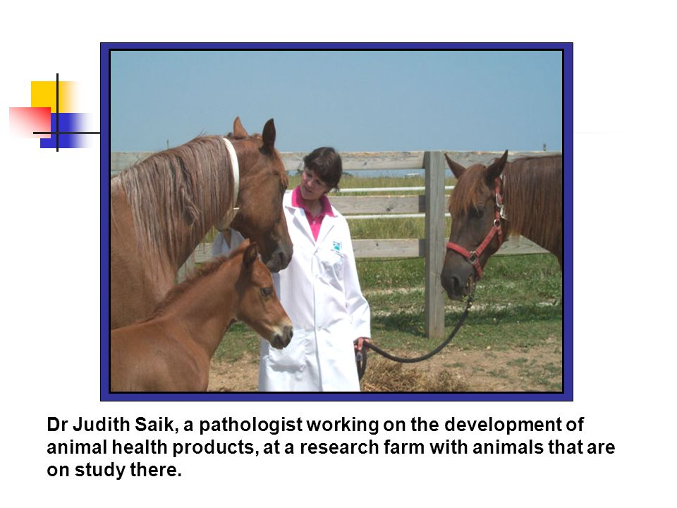 Dr Judith Saik, a pathologist working on the development of animal health products, at a research farm with animals that are on study there.