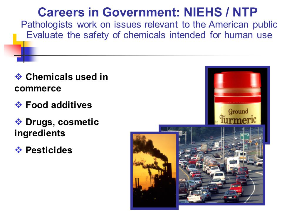 Careers in Government: NIEHS / NTP Pathologists work on issues relevant to the American public Evaluate the safety of chemicals intended for human use  Chemicals used in commerce  Food additives  Drugs, cosmetic ingredients  Pesticides