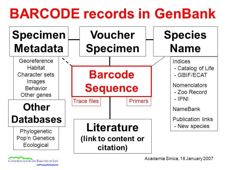 Academia Sinica, 16 January 2007 Barcode Sequence Voucher Specimen Species Name Specimen Metadata Literature (link to content or citation) BARCODE records in GenBank Indices - Catalog of Life - GBIF/ECAT Nomenclators - Zoo Record - IPNI NameBank Publication links - New species Georeference Habitat Character sets Images Behavior Other genes Trace files Other Databases Phylogenetic Pop'n Genetics Ecological Primers