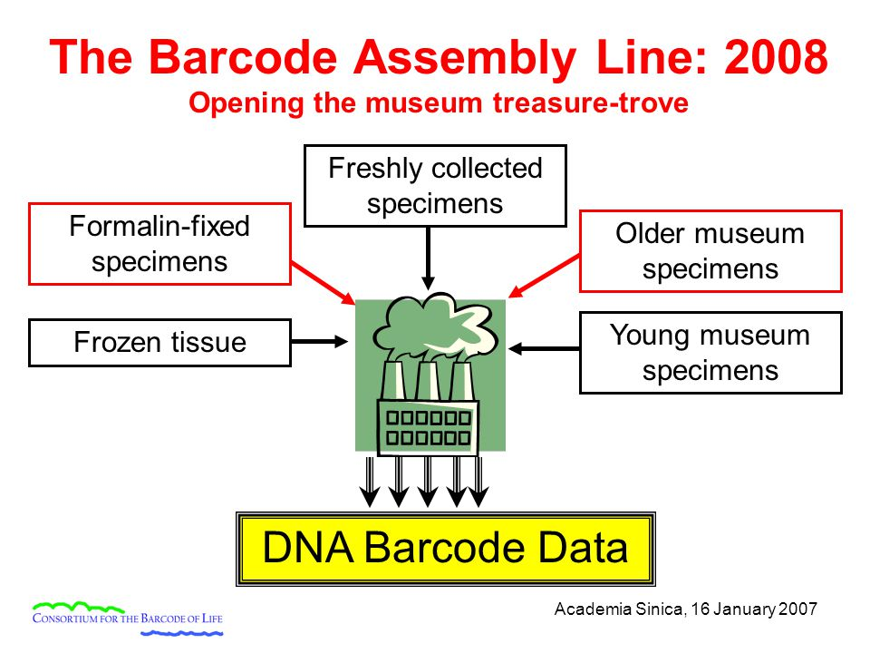 Academia Sinica, 16 January 2007 The Barcode Assembly Line: 2008 Opening the museum treasure-trove Freshly collected specimens Frozen tissue Young museum specimens DNA Barcode Data Formalin-fixed specimens Older museum specimens