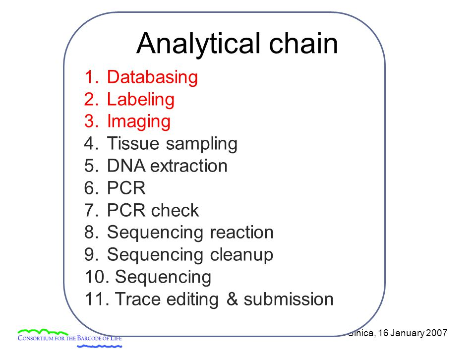 Academia Sinica, 16 January 2007 1. Databasing 2. Labeling 3. Imaging 4. Tissue sampling 5. DNA extraction 6. PCR 7. PCR check 8. Sequencing reaction