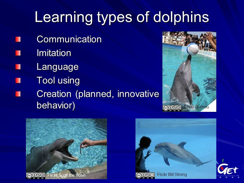 Learning types of dolphins CommunicationImitationLanguage Tool using Creation (planned, innovative behavior) Flickr Scott the Hobo Flickr Bill Strong Flickr Gunrou