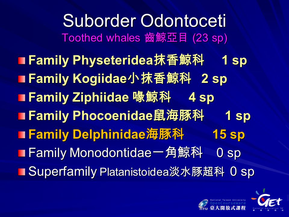 Suborder Odontoceti Toothed whales 齒鯨亞目 (23 sp) Family Physeteridea 抹香鯨科 1 sp Family Kogiidae 小抹香鯨科 2 sp Family Ziphiidae 喙鯨科 4 sp Family Phocoenidae 鼠海豚科 1 sp Family Delphinidae 海豚科 15 sp Family Monodontidae 一角鯨科 0 sp Superfamily Platanistoidea 淡水豚超科 0 sp