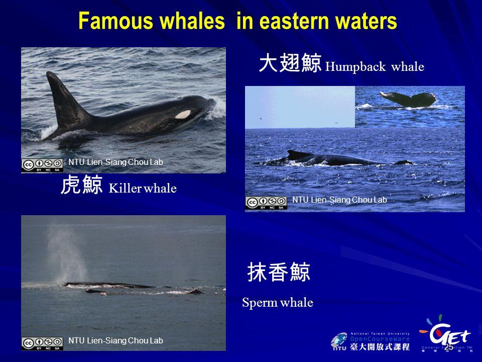 25 虎鯨 抹香鯨 大翅鯨 Humpback whale Killer whale Sperm whale Famous whales in eastern waters NTU Lien-Siang Chou Lab