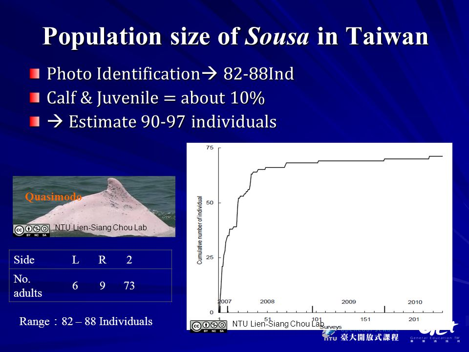 Population size of Sousa in Taiwan Photo Identification  82-88Ind Calf & Juvenile = about 10%  Estimate 90-97 individuals Side LR2 No.