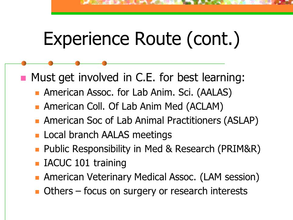 Experience Route (cont.) Must get involved in C.E.