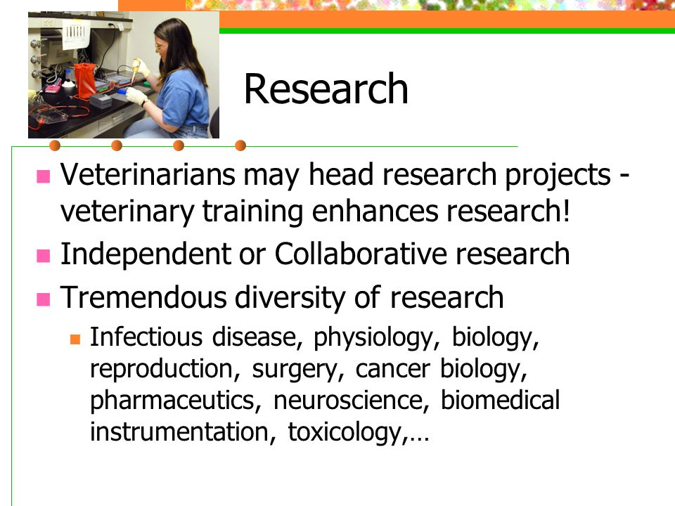 Research Veterinarians may head research projects - veterinary training enhances research.