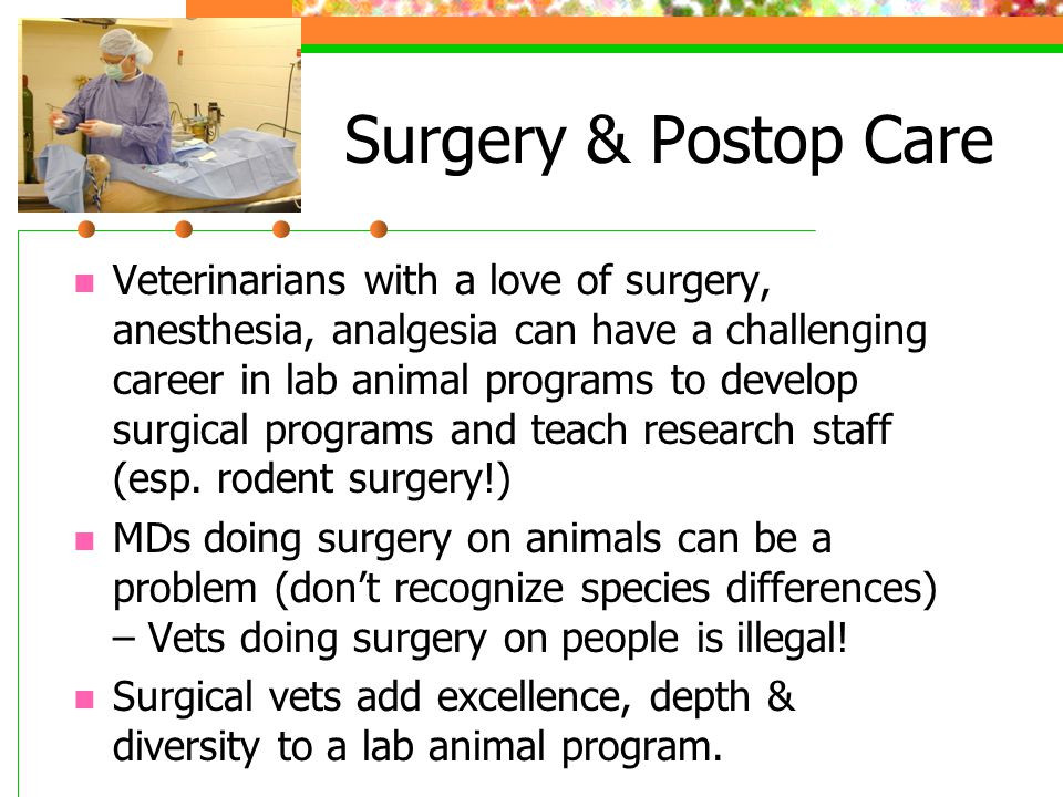Surgery & Postop Care Veterinarians with a love of surgery, anesthesia, analgesia can have a challenging career in lab animal programs to develop surgical programs and teach research staff (esp.