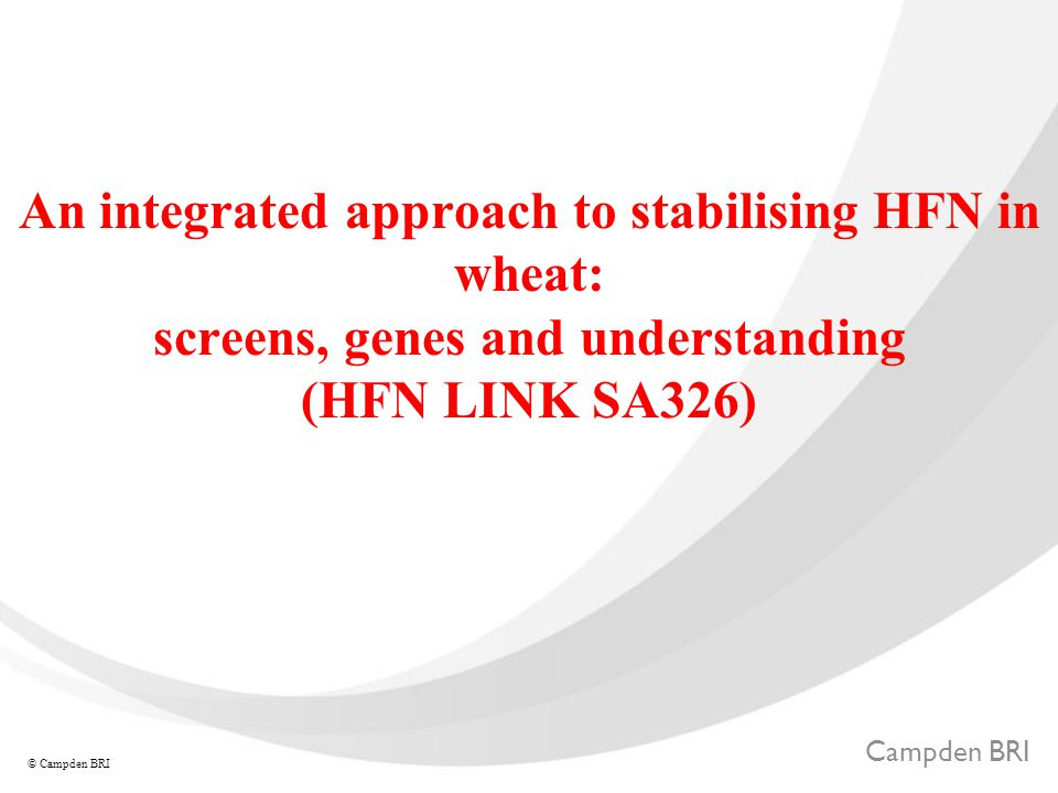 Campden BRI © Campden BRI An integrated approach to stabilising HFN in wheat: screens, genes and understanding (HFN LINK SA326)