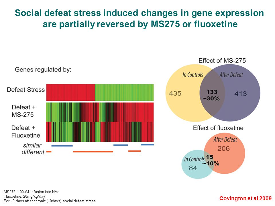 Covington et al 2009 Social defeat stress induced changes in gene expression are partially reversed by MS275 or fluoxetine MS275: 100μM infusion into NAc Fluoxetine: 20mg/kg/day For 10 days after chronic (10days) social defeat stress