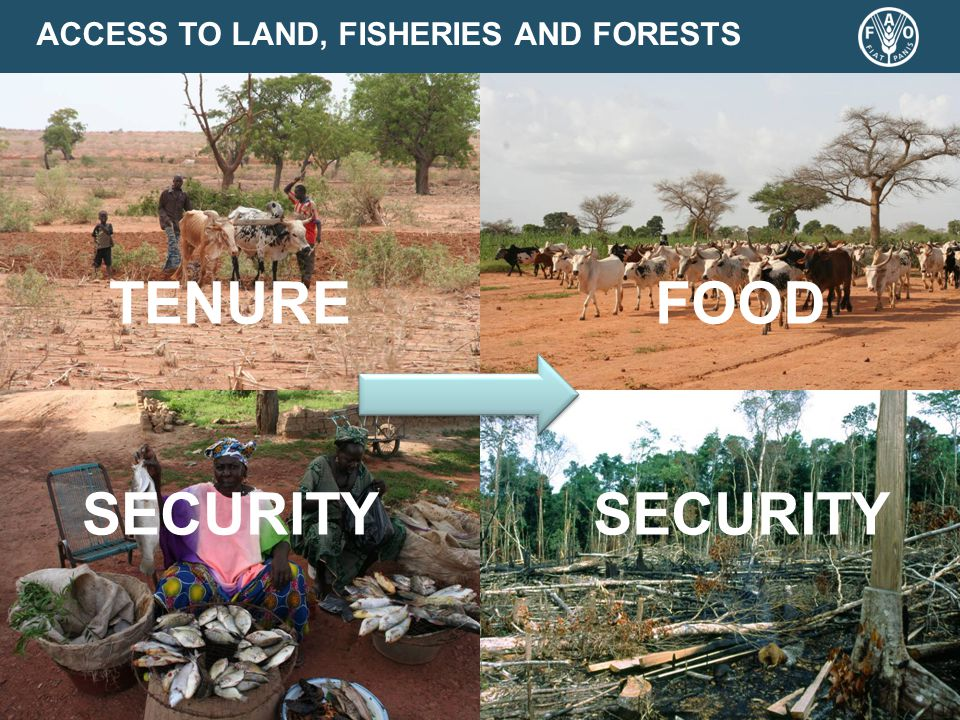 ACCESS TO LAND, FISHERIES AND FORESTS TENURE SECURITY FOOD SECURITY