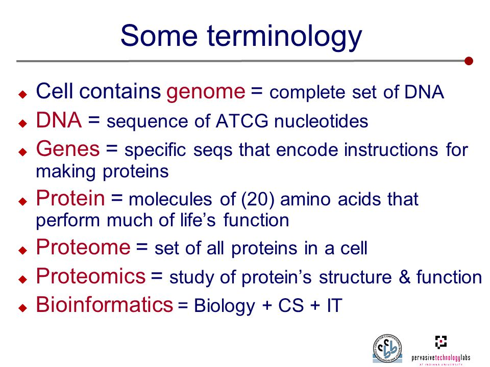 Some terminology  Cell contains genome = complete set of DNA  DNA = sequence of ATCG nucleotides  Genes = specific seqs that encode instructions for making proteins  Protein = molecules of (20) amino acids that perform much of life's function  Proteome = set of all proteins in a cell  Proteomics = study of protein's structure & function  Bioinformatics = Biology + CS + IT