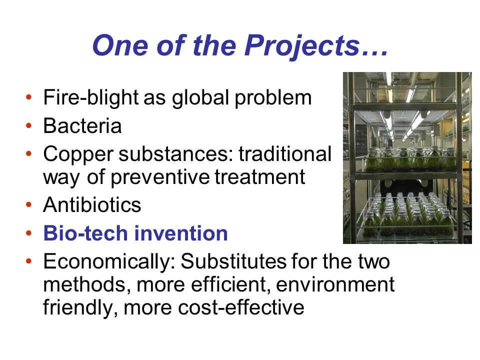 One of the Projects… Fire-blight as global problem Bacteria Copper substances: traditional way of preventive treatment Antibiotics Bio-tech invention Economically: Substitutes for the two methods, more efficient, environment friendly, more cost-effective