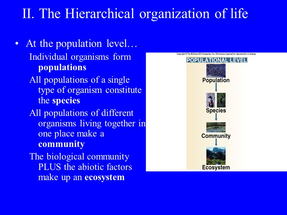 II. The Hierarchical organization of life At the organismal level… Cells organized in 3 levels: tissue organ organ system The set of organ systems for