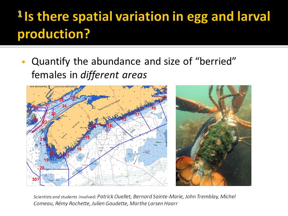 Quantify the abundance and size of berried females in different areas Scientists and students involved: Patrick Ouellet, Bernard Sainte-Marie, John Tremblay, Michel Comeau, Rémy Rochette, Julien Gaudette, Marthe Larsen Haarr