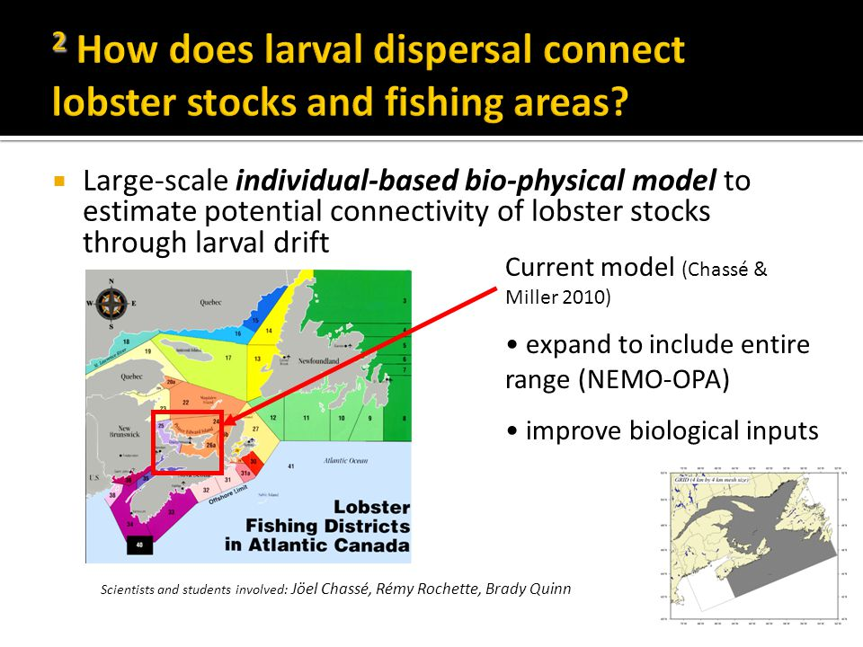  Large-scale individual-based bio-physical model to estimate potential connectivity of lobster stocks through larval drift Current model (Chassé & Miller 2010) expand to include entire range (NEMO-OPA) improve biological inputs Scientists and students involved: Jöel Chassé, Rémy Rochette, Brady Quinn