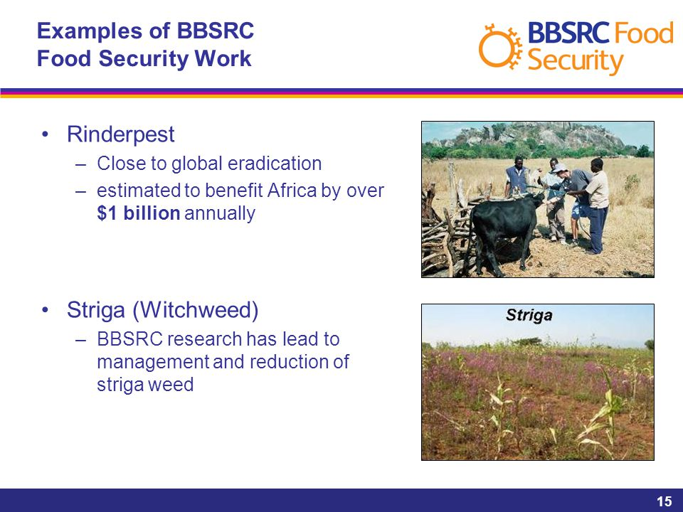 15 Examples of BBSRC Food Security Work Rinderpest –Close to global eradication –estimated to benefit Africa by over $1 billion annually Striga (Witch