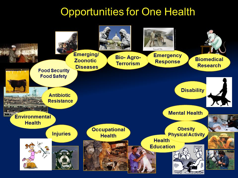 Opportunities for One Health Food Security Food Safety Emerging/ Zoonotic Diseases Bio- Agro- Terrorism Injuries Occupational Health Mental Health Environmental Health Antibiotic Resistance Emergency Response Disability Health Education Obesity Physical Activity Biomedical Research