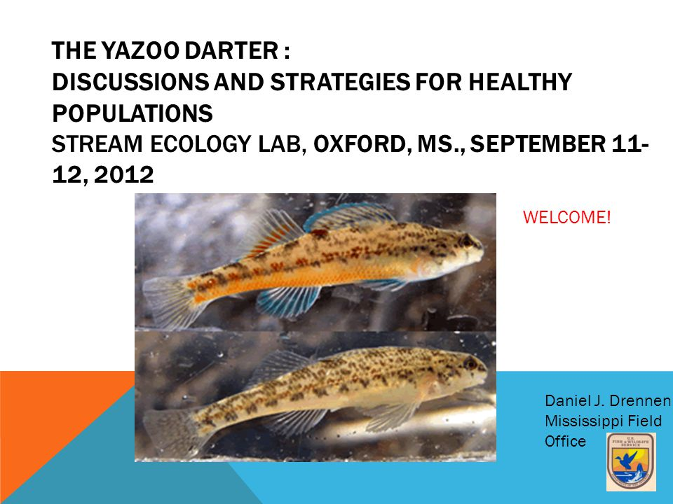THE YAZOO DARTER : DISCUSSIONS AND STRATEGIES FOR HEALTHY POPULATIONS STREAM ECOLOGY LAB, OXFORD, MS., SEPTEMBER 11- 12, 2012 Daniel J.