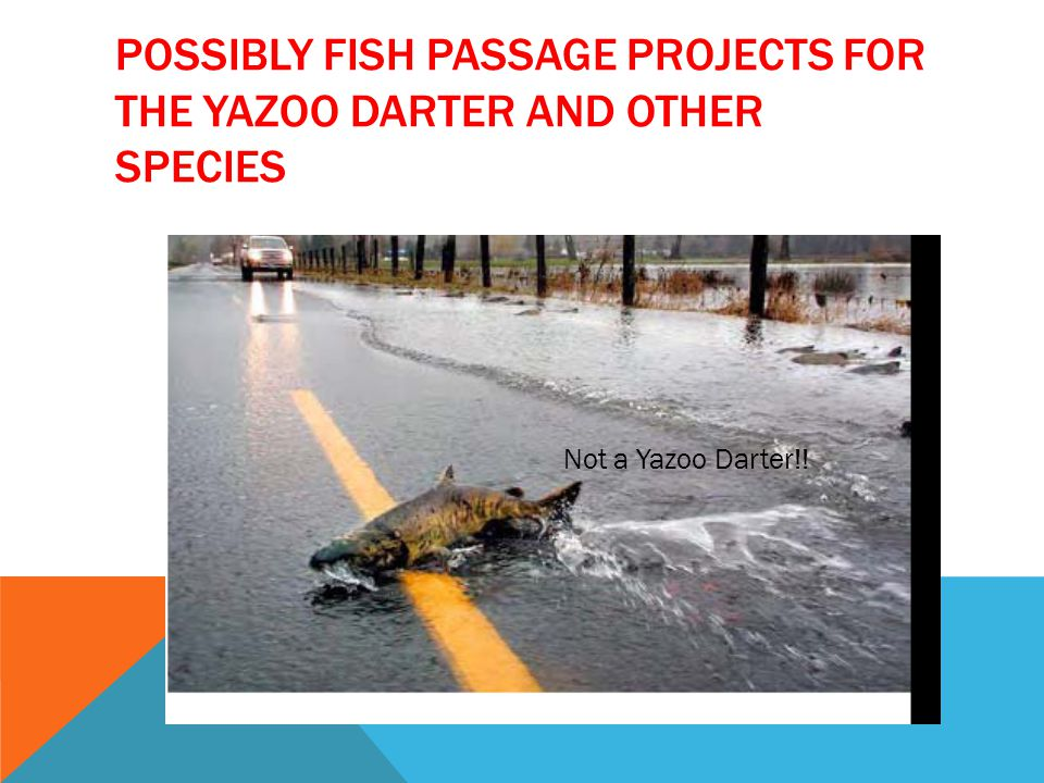 POSSIBLY FISH PASSAGE PROJECTS FOR THE YAZOO DARTER AND OTHER SPECIES Not a Yazoo Darter!!