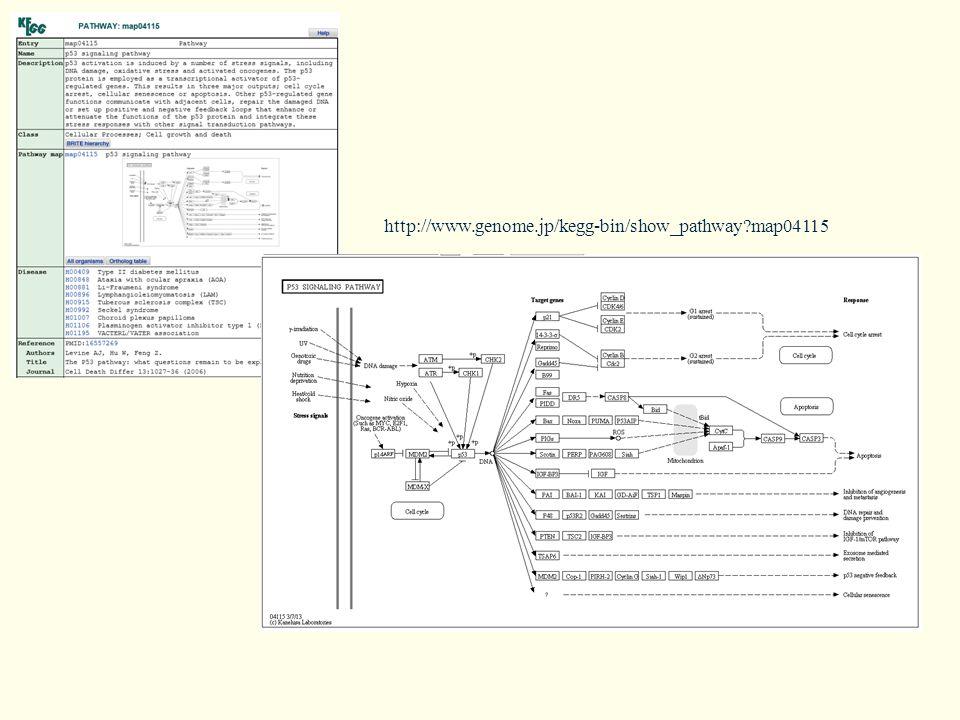 http://www.genome.jp/kegg-bin/show_pathway?map04115