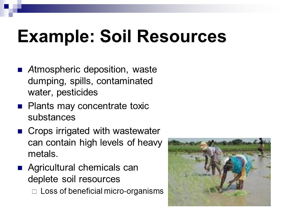 Example: Soil Resources Atmospheric deposition, waste dumping, spills, contaminated water, pesticides Plants may concentrate toxic substances Crops irrigated with wastewater can contain high levels of heavy metals.