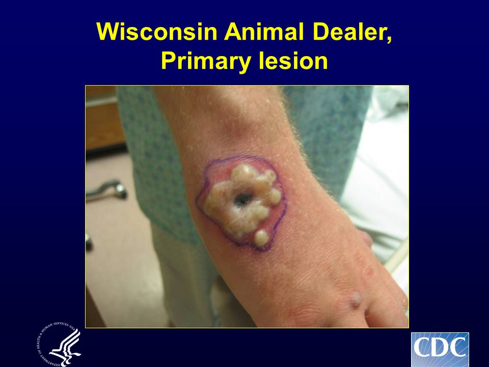 Wisconsin Animal Dealer, Primary lesion