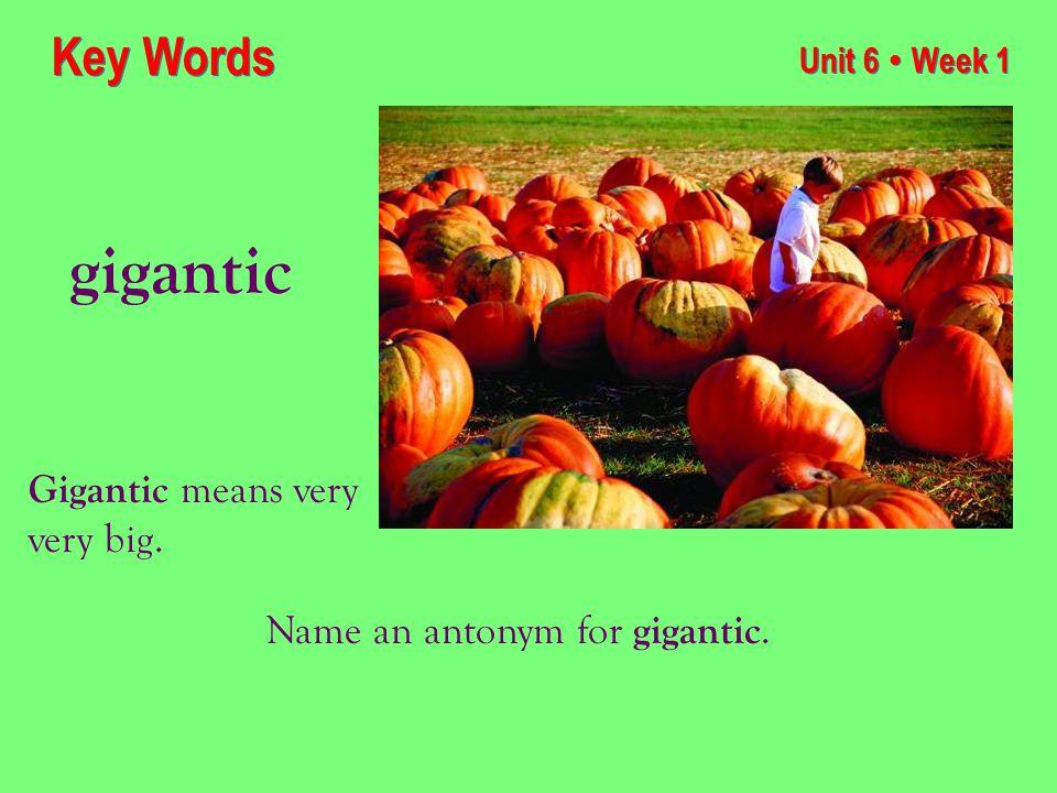 Unit 6 ● Week 1 gigantic Key Words Gigantic means very very big. Name an antonym for gigantic.