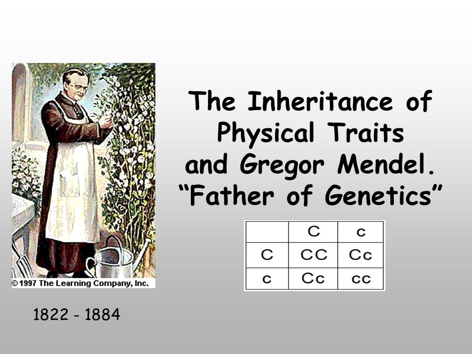 The Inheritance of Physical Traits and Gregor Mendel. Father of Genetics 1822 - 1884