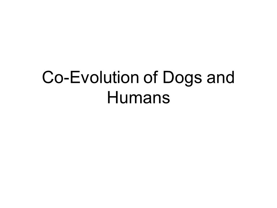 Co-Evolution of Dogs and Humans