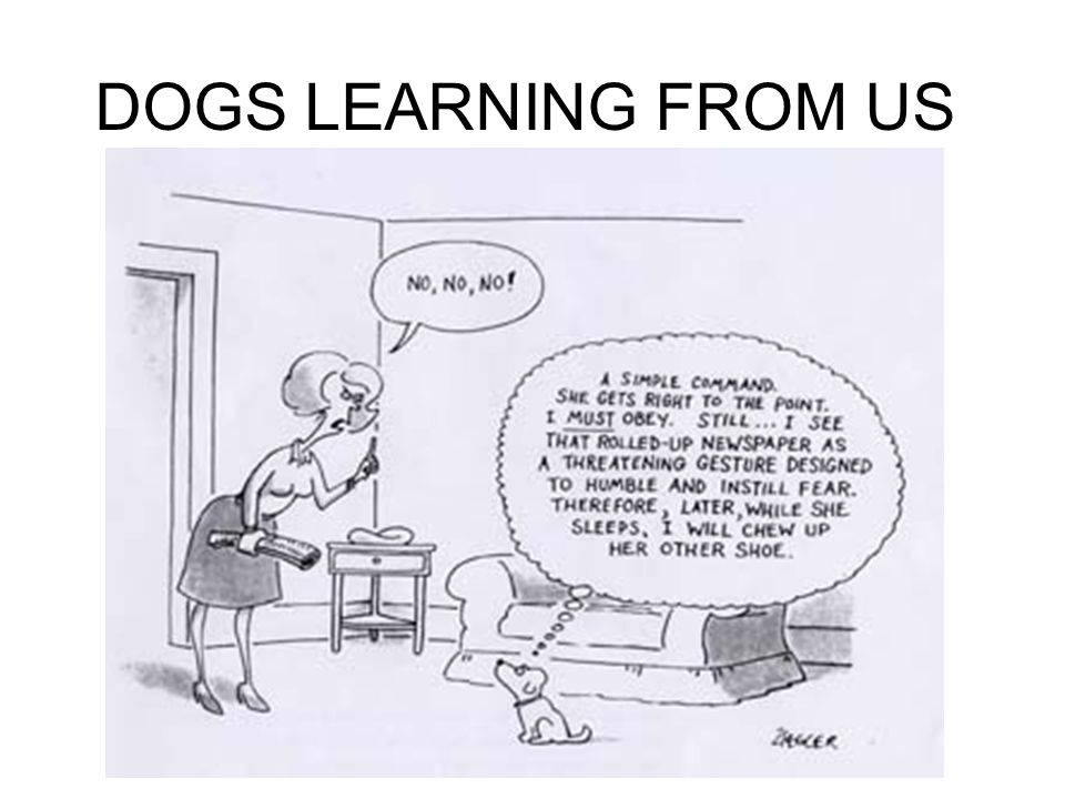 DOGS LEARNING FROM US